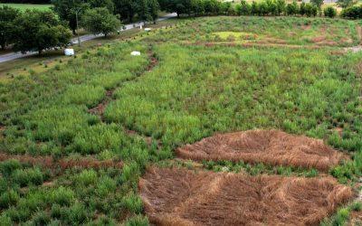 Willowgrove Landscape Plant Listing